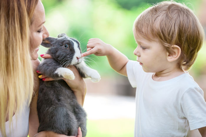 Little boy touching a rabbit's nose